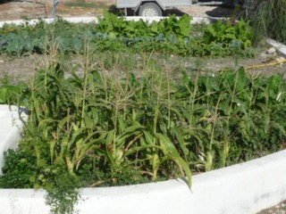 Vegetable plot