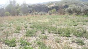 Land, FSRN15